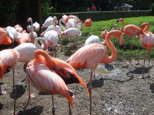Image of some flamingos.